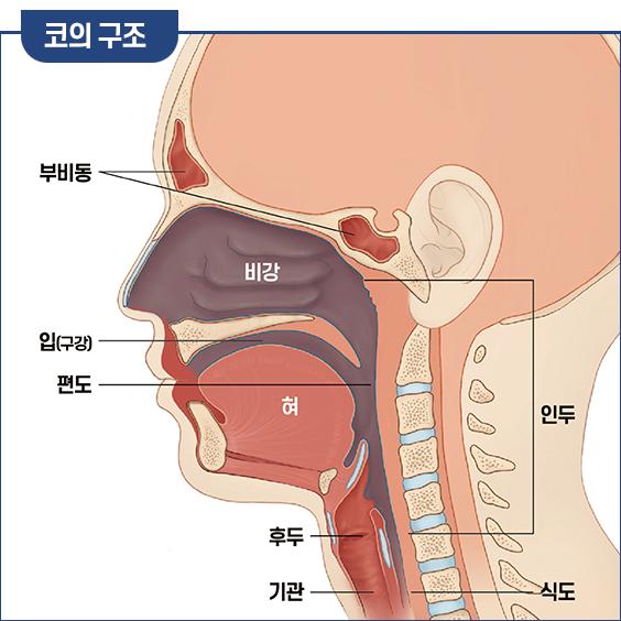 코의 구조